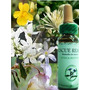 Flores Of Bach Frascos De 30ml