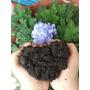 Fertilizante/abono/ Agricultura Organica - Biochar Activado