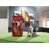 Cachorro Chihuahua De Bolsillo
