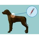 Microchip Mascotas, Perros, Gatos, Viaje