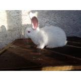 Manual Cunicultura - Conejos Como Los Deseas