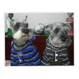Ropa Canina Sweater Franelas Ropa Para Mascotas