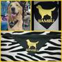 Pañuelos Para Tus Perros Personalizados