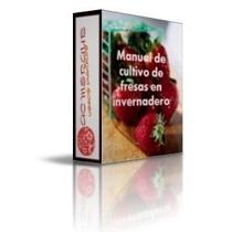 Aprende El Cultivo De La Fresa En Invernaderos E Hidroponica