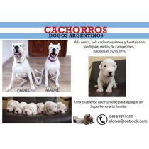 Vendo Cachorros Dogos Argentinos Con Pedigree