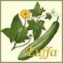 Semillas De Esponja Vegetal Luffa, Baño, Piel + Guía Cultivo
