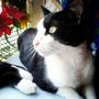 Regalo O Doy En Adopción Lindos Gatos