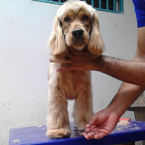 Peluqueria Canina A Domicilio Fashion Puppies