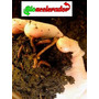 Lombricultura Acelerador De Composta Para Lombriz 1 Kilo